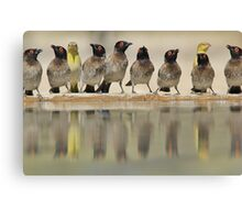 Colorful Exotic Wild Birds from Africa - Water is Life - Bulbul and Weaver Canvas Print