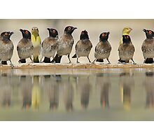 Colorful Exotic Wild Birds from Africa - Water is Life - Bulbul and Weaver Photographic Print