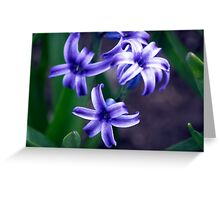 Spring Flower Series 11 Greeting Card