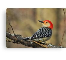Red Bellied Woodpecker - Exotic Colorful Wild Birds - Colors in Nature Canvas Print