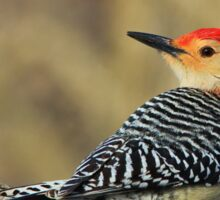 Red Bellied Woodpecker - Exotic Colorful Wild Birds - Colors in Nature Sticker