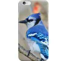 Blue Jay - Exotic Colorful Wild Birds - Natural Beauty iPhone Case/Skin