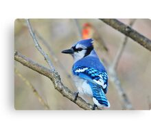Blue Jay - Exotic Colorful Wild Birds - Natural Beauty Canvas Print