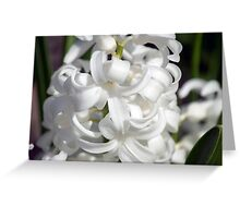 Spring Flower Series 22 Greeting Card