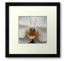 Orchid..Reverance, Humility, Innocence Framed Print
