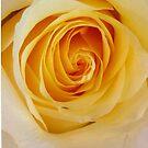 Yellow Rose..Joy,Caring,Memories by jewd barclay