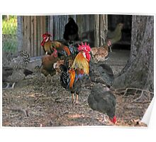 Rooster in the hen house Poster