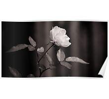Floral Black White Poster