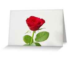 Single Red Rose Greeting Card