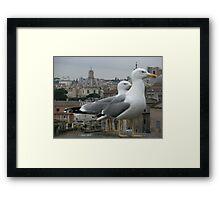 See gulls in Rome! Framed Print