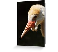 Young wattled crane Greeting Card