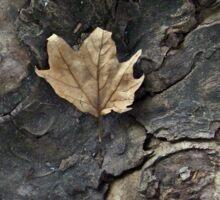Little leaf  Sticker