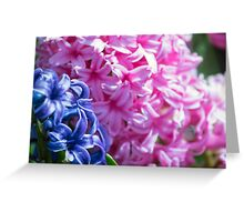 Spring Flower Series 24 Greeting Card