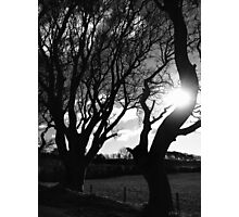 Light through the trees Photographic Print