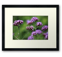 The flowers in the walled garden. Framed Print