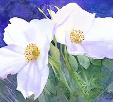 White rose (Rosa Rugosa Alba) (Original painting sold) by Jacki Stokes