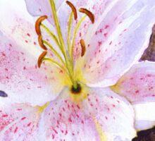 "Lily ""Muscadet"" (Lilium Orientalis Muscadet) Sticker"