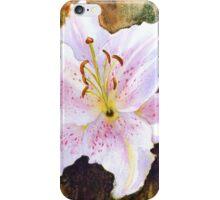 "Lily ""Muscadet"" (Lilium Orientalis Muscadet) iPhone Case/Skin"