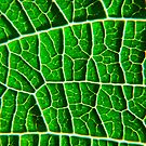 Green Leaf by mrthink