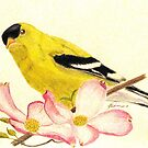 Goldfinch Spring by AngieDavies
