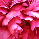 Pink Petticoats by Jacki Stokes