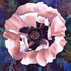 Oriental poppy (Patty's Plum?) by Jacki Stokes