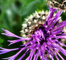 Looking Down on Thistle Flower Sticker