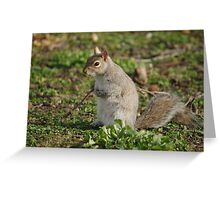 Squirrel Cradling Nuts Greeting Card