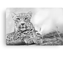 Tawny Tiger Canvas Print
