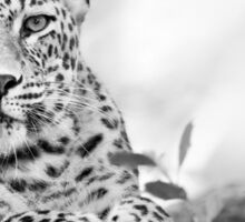 Tawny Tiger Sticker