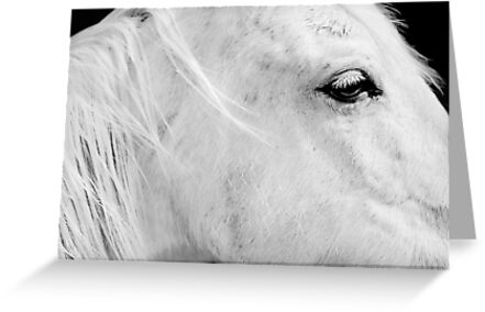A Horse With No Name by Laurie Minor