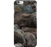 Angel Bay Seal  iPhone Case/Skin