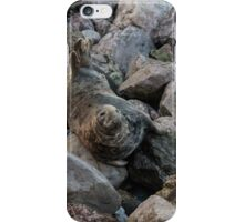 Seal in Angel Bay  iPhone Case/Skin