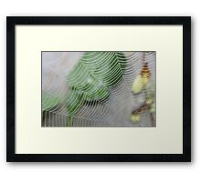 spider web in the dew by bs hilton Framed Print