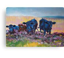 Black Cows on dartmoor landscape painting Canvas Print