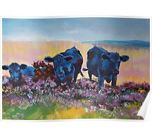 Black Cows on dartmoor landscape painting Poster