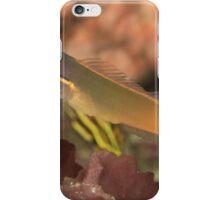 Tailspot Blenny iPhone Case/Skin