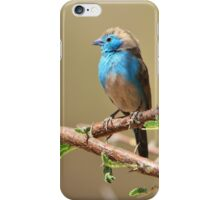 Blue Waxbill - Colorful Wild Birds from Africa - Beautiful Bliss iPhone Case/Skin