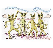 Zombie Cats Photographic Print