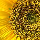 Sunflower Macro by WeeZie