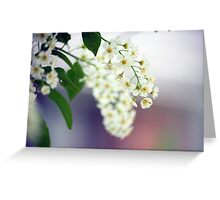 Spring Flower Series 30 Greeting Card