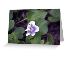 Spring Flower Series 33 Greeting Card