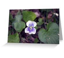 Spring Flower Series 34 Greeting Card