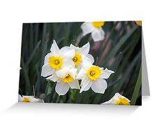 Spring Flower Series 36 Greeting Card