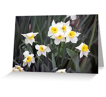 Spring Flower Series 38 Greeting Card