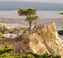 The Lone Cypress, Pebble Beach Sticker