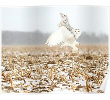 Goddess of the snowy fields Poster