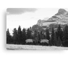 Elk fight Canvas Print