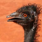 emu coiffure by roger smith