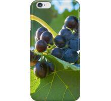 Australian shiraz grapes ripe for picking iPhone Case/Skin